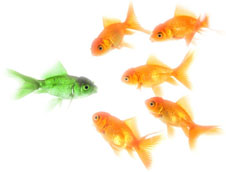 Competitive advantage and differentiation